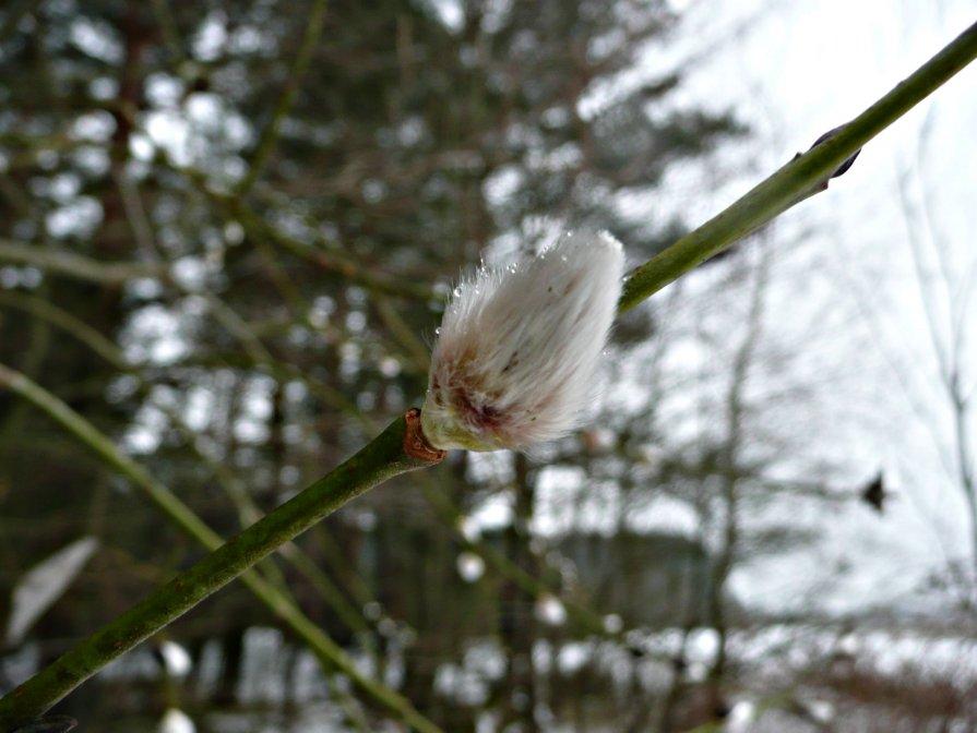 Пришла Весна... - Саша Матвіюк
