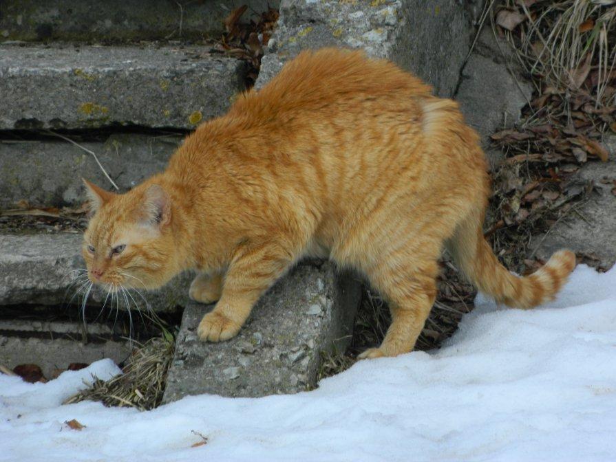 А где угощение......в день кошек!? - Lina Liber