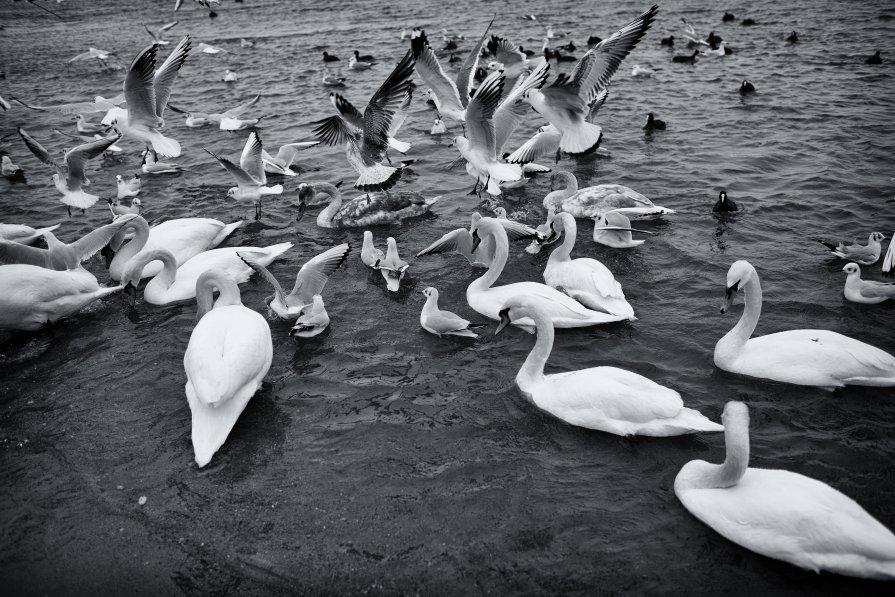 Птичий базар... - Вахтанг Хантадзе