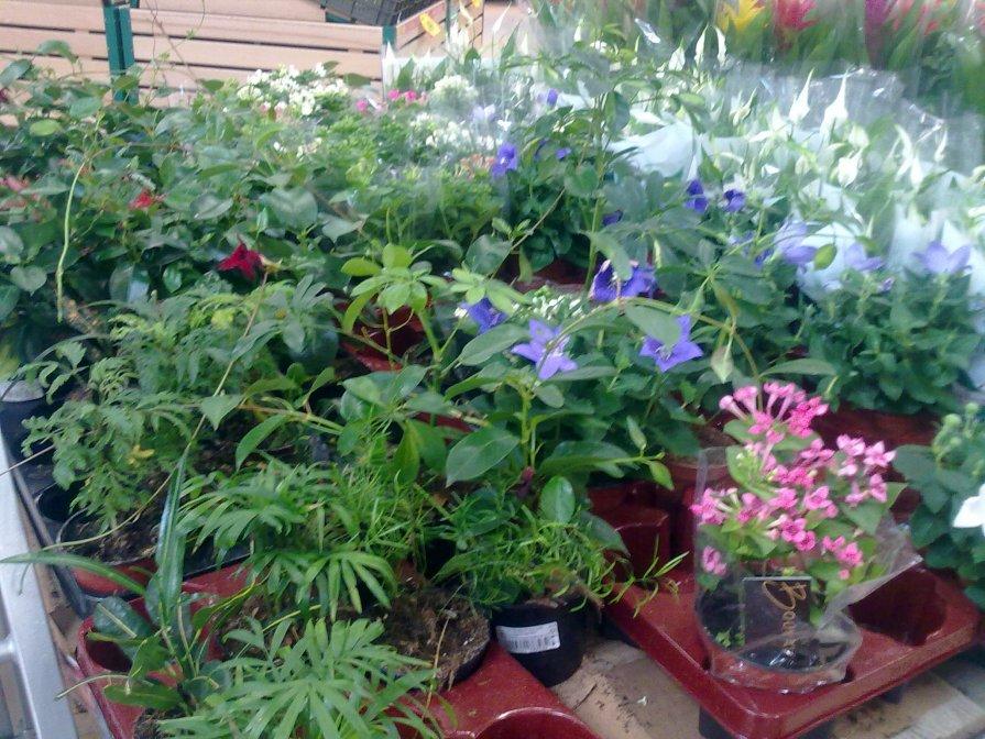 cvety - жанара zhanara