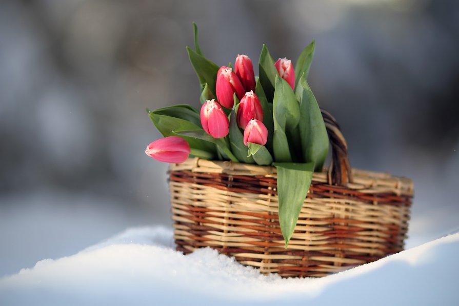Зима встречается с весною... - Наталья Лузинова
