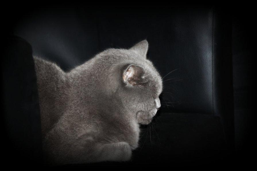 На кресле кожаном спокойно дрыхнет кот... - Галина К.