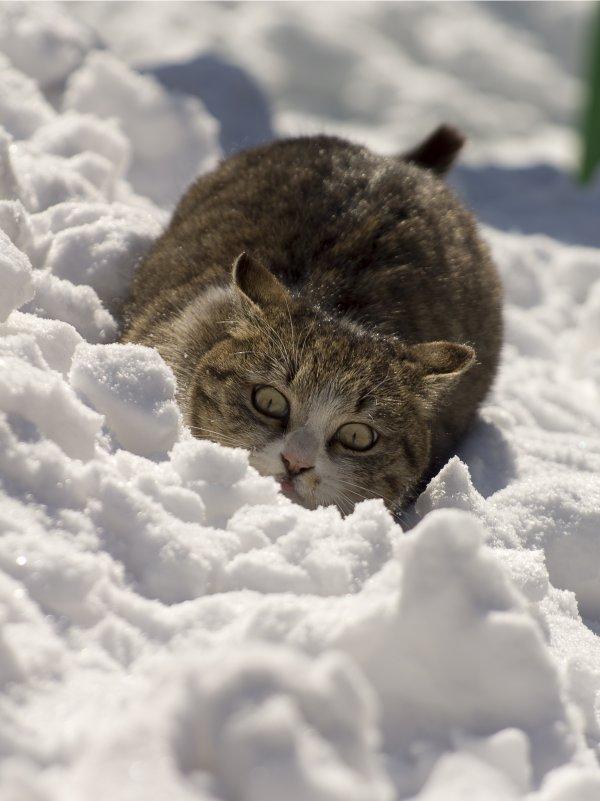 Кошка - Дмитрий К