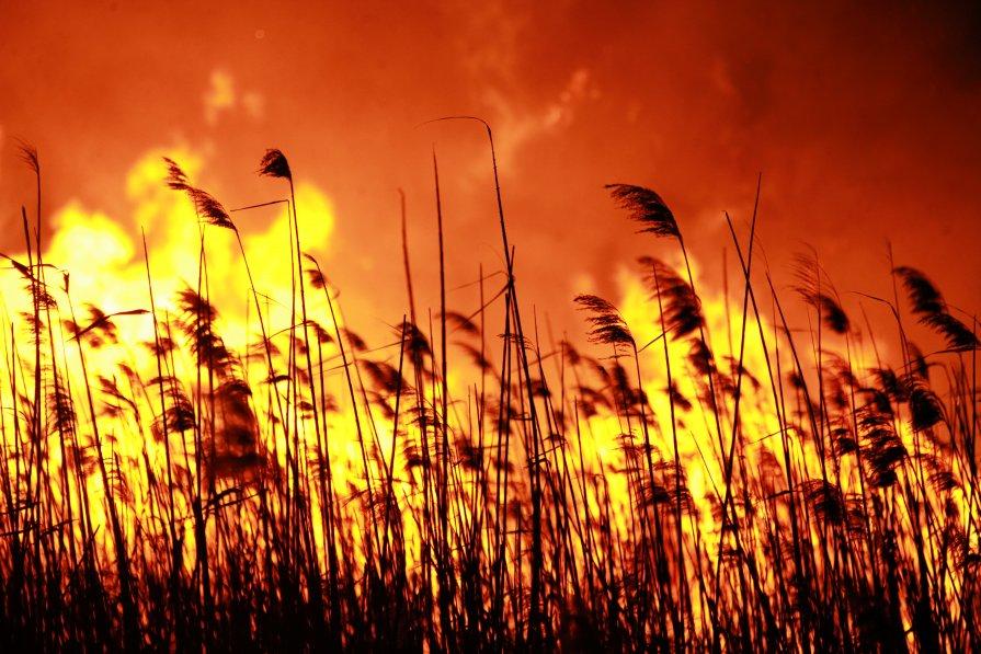Пожар Анапские плавни №2 :: Alex Romanov – Социальная сеть ...: http://fotokto.ru/photo/view/272462.html