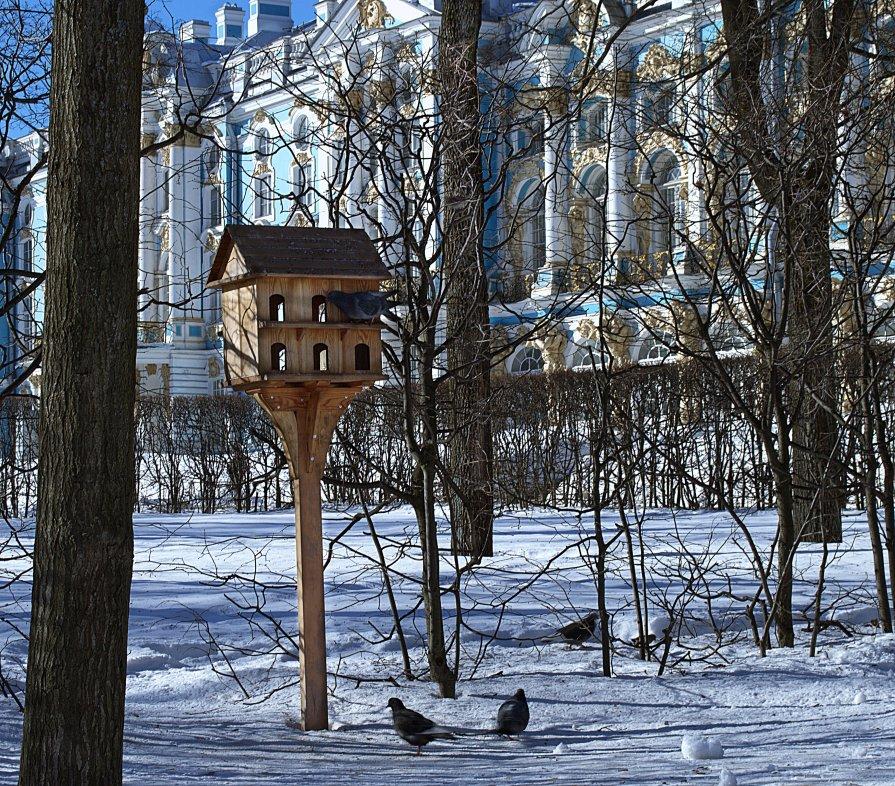 Птичья кормушка в Екатерининском парке.Царское село. - Рай Гайсин