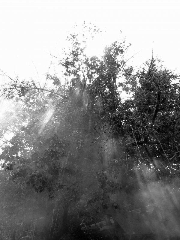 Яблоня - ольга хадыкина