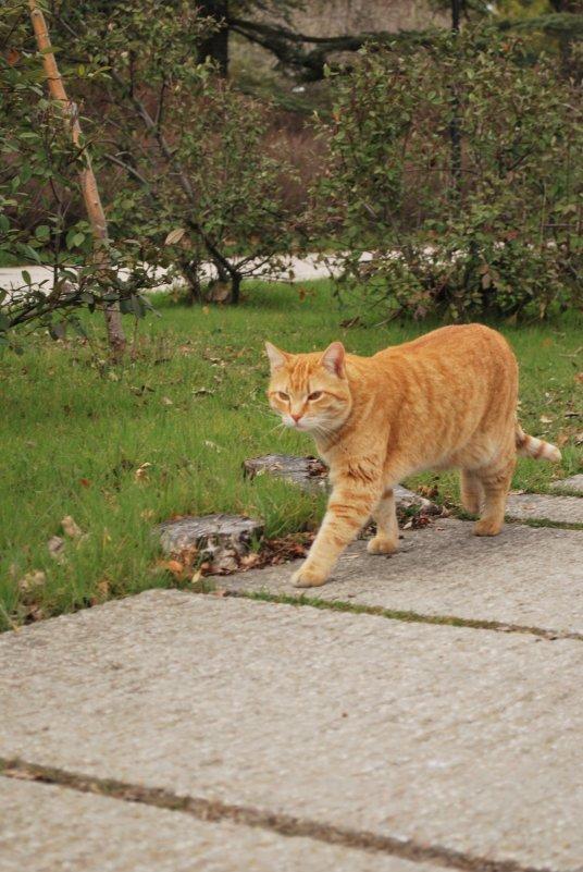 Рыжий кот - Elena Balatskaya