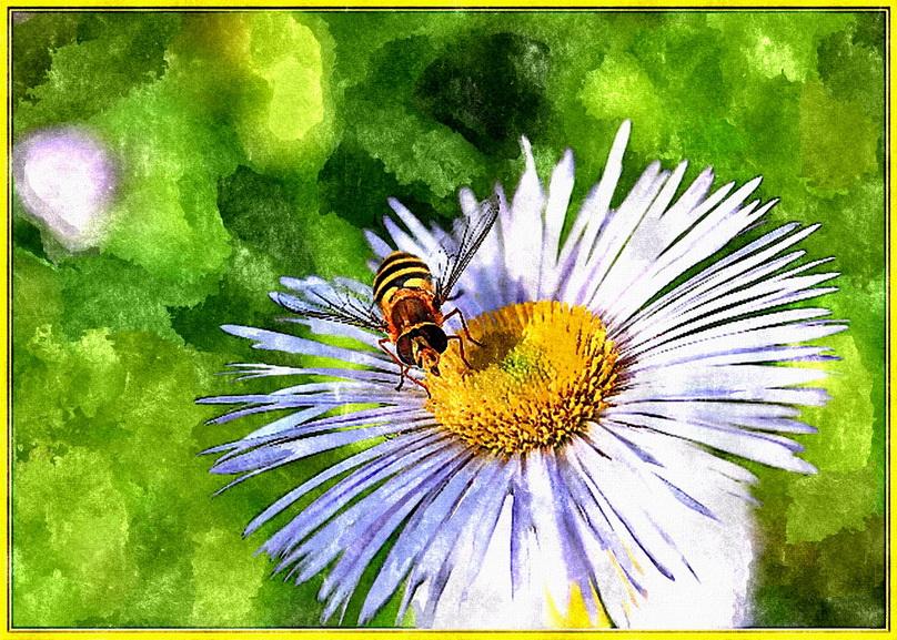Любимые ,полевые цветы - ALISA LISA