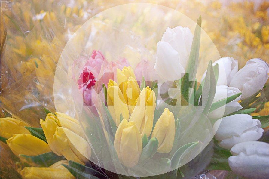 День Весны - Николай Шлыков