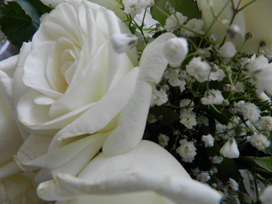 Букет из белых роз - Евгений Филатов