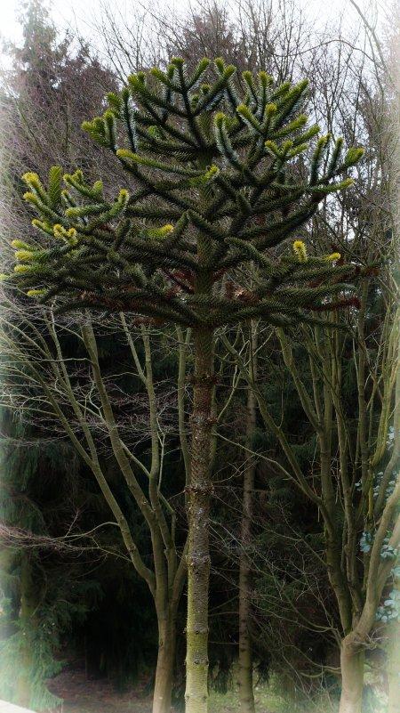 А вон оно... дерево - Андрей Бойко