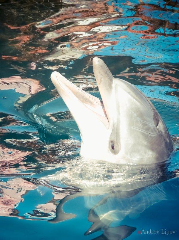 дельфин - Андрей Липов