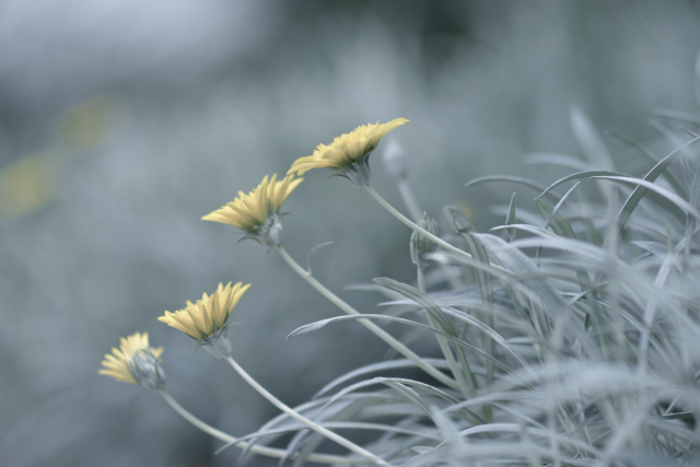 Из жизни цветов... - Sofia Rakitskaia