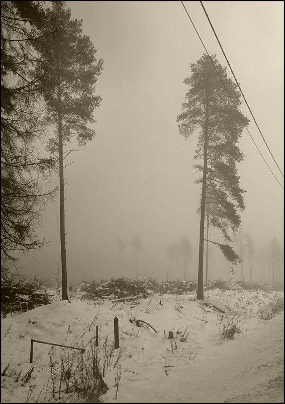 Туманое фото - antip49 antipof