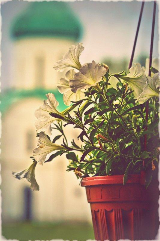 Летне-цветочное... - Ольга Сергеева