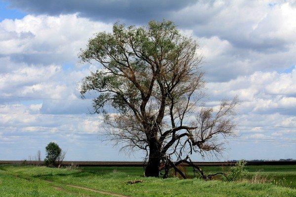 Одиночество - Анатолий Мартынюк