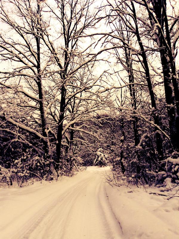 Дорога в лесу - Мария Лапшина