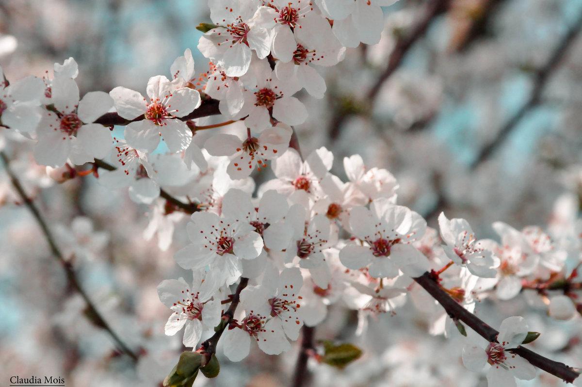 весна - Клаудия Мойш