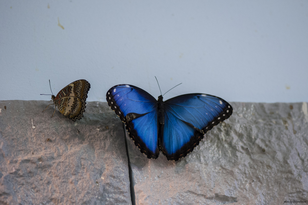 butterfly - Александр Голубев