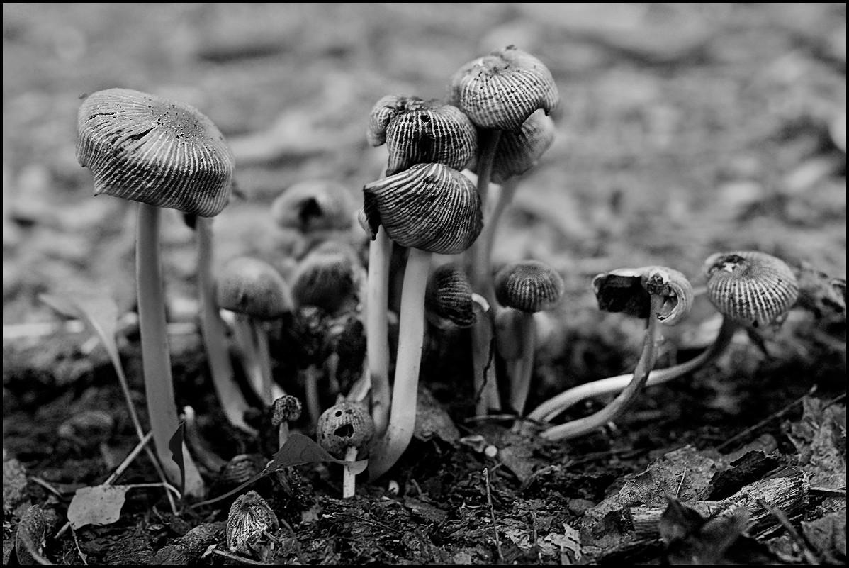 грибочки - DR photopehota