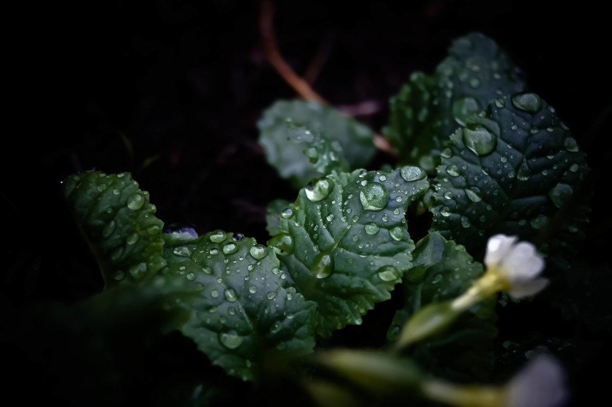 после дождя - Виктория Виноградова