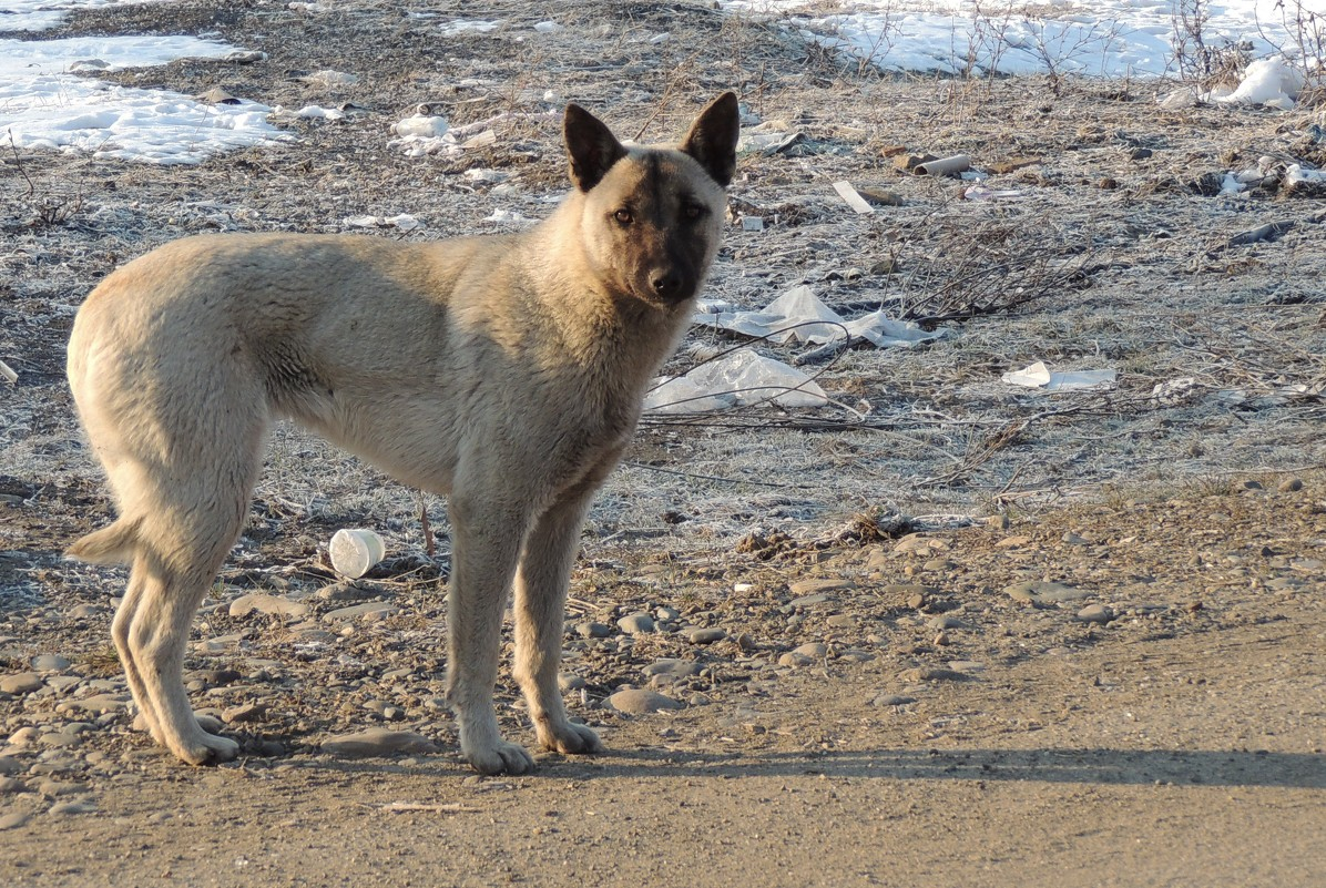 Бродячая собака - Виталий Вильценс