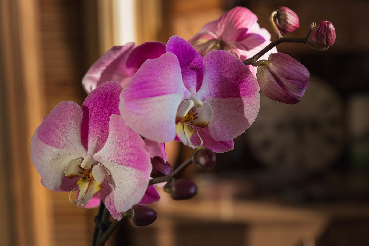 Орхидея - Сергей СВ