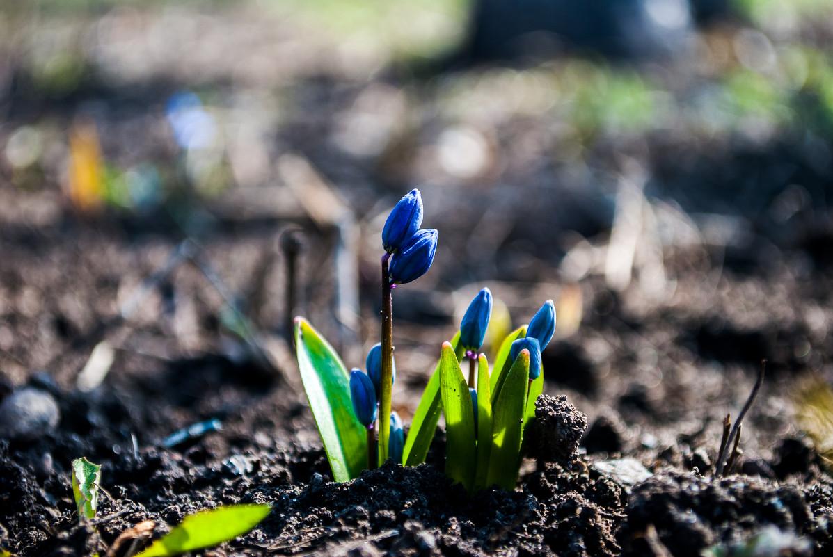 цветы - Алина Гриб
