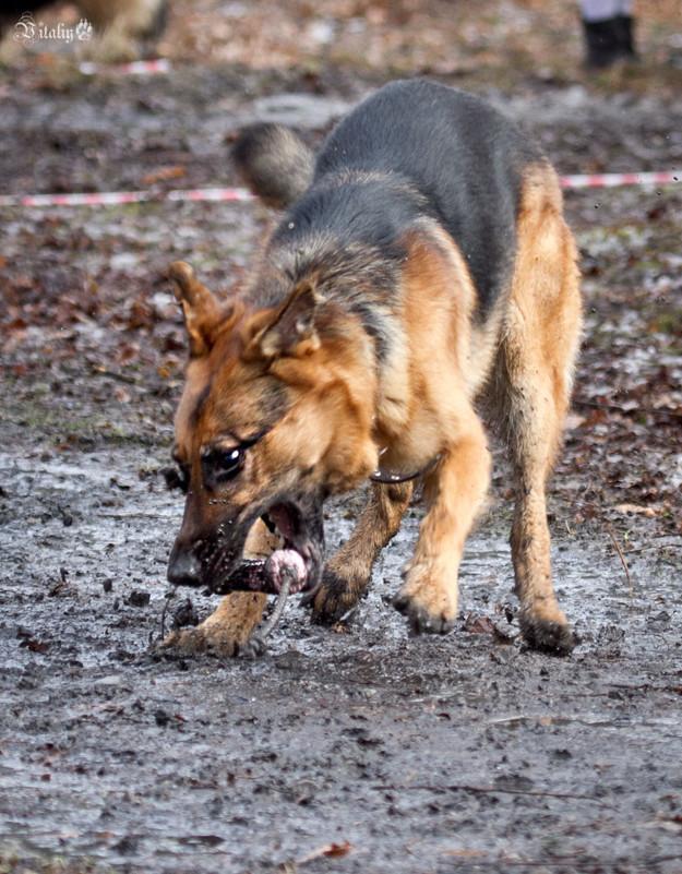 Собачье счастье 5 виталий латышонок