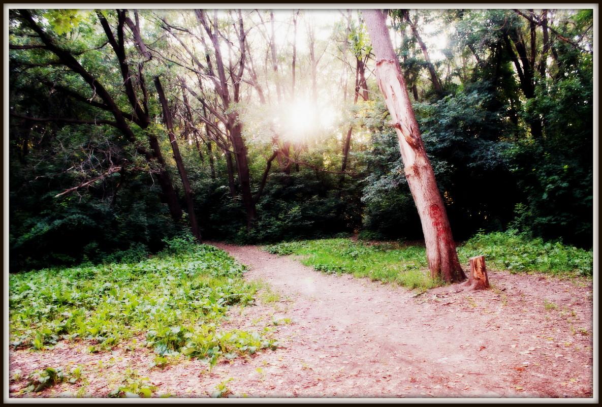 солнечный лес - Оксана Тагаева