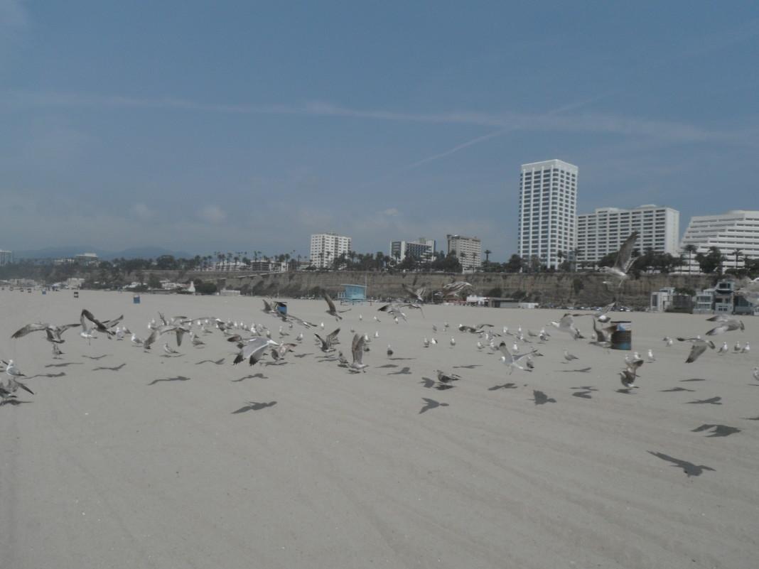 птицы на пляже - нина полянская