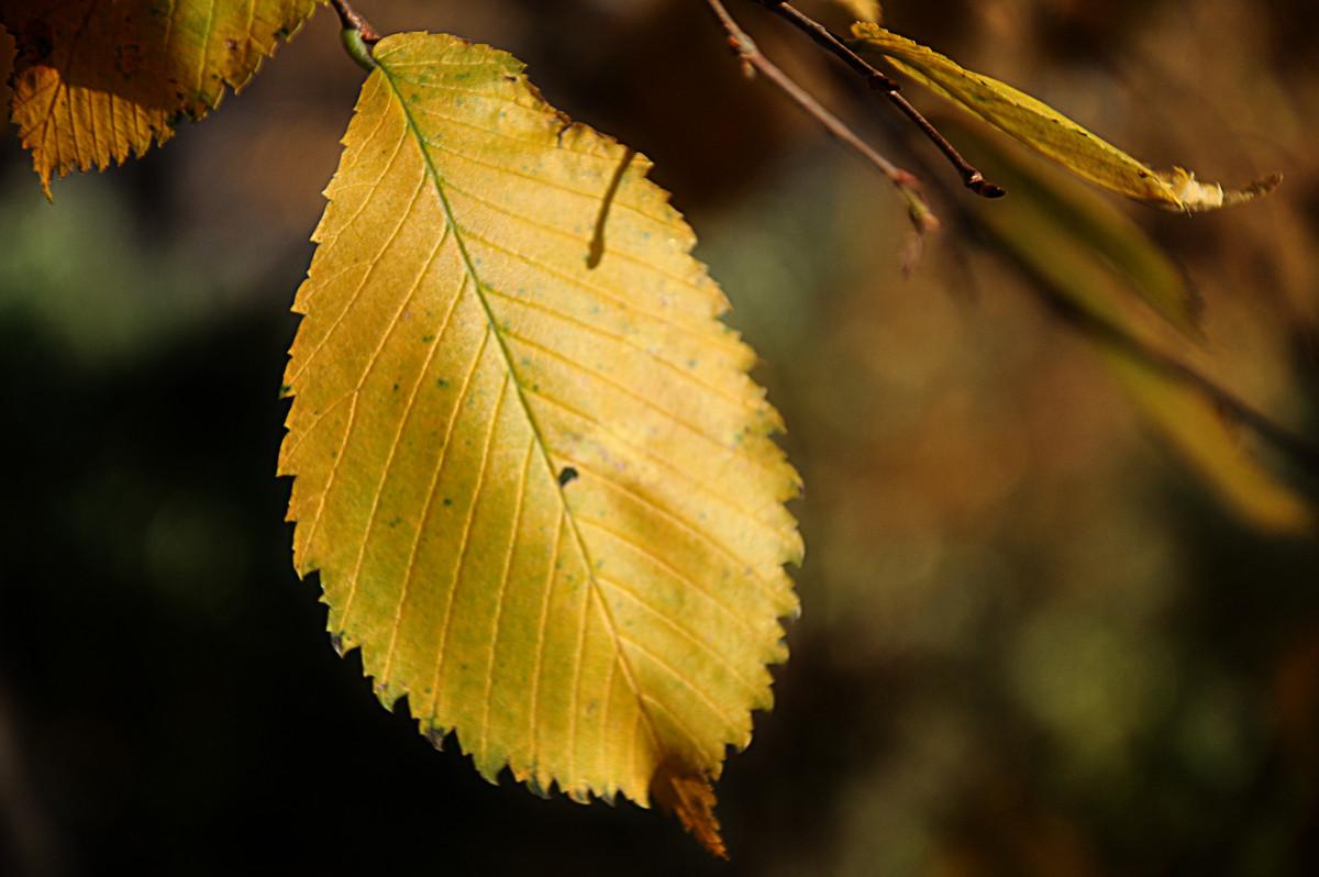 Осень - Сергей Дячкин