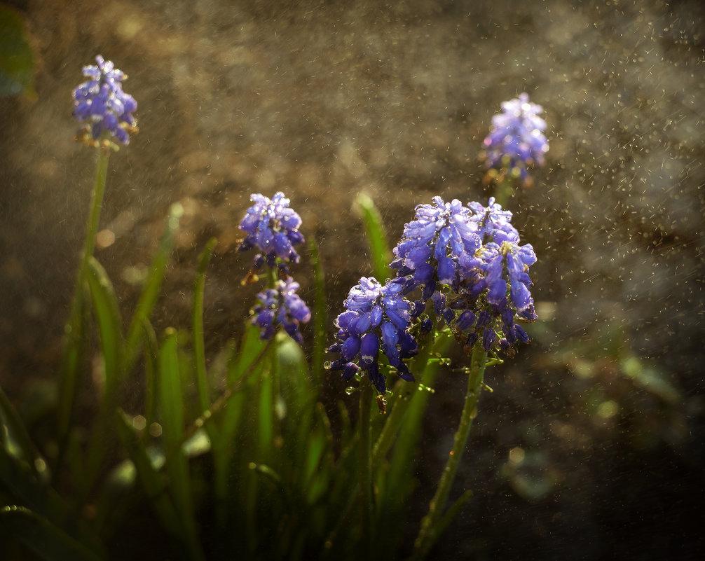 Первоцветы - Татьяна Курамшина
