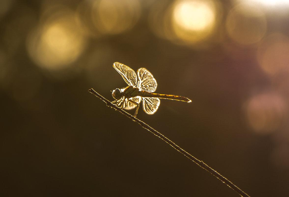 Золотая стрекоза - Марина