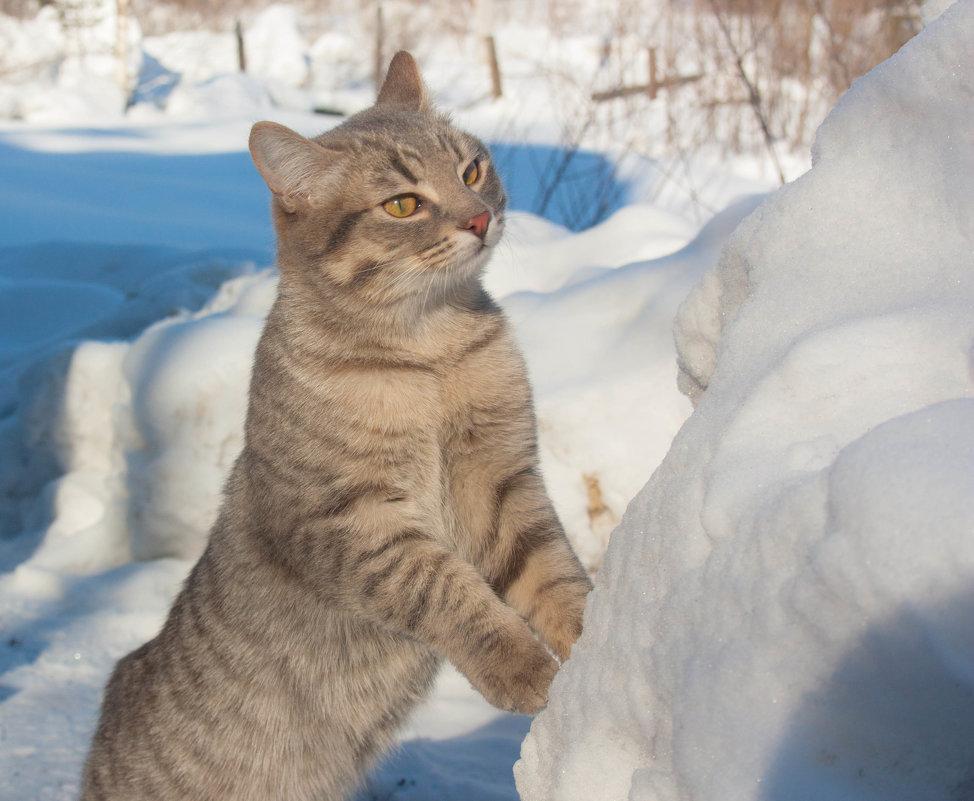 Зима в разгаре - Мила Солнечная