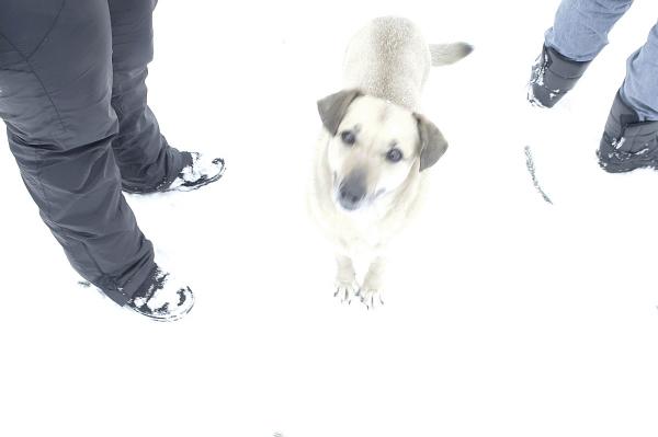 собака на белом - Валерий Горбунов