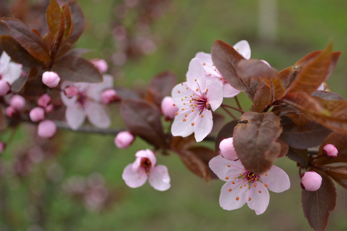 Весна - Ольга Рыбакова