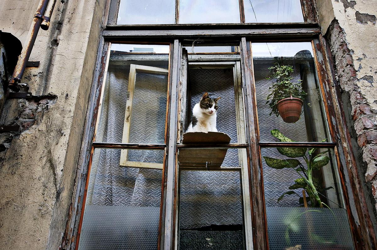 Кошка на окошкЕ - Алексей Астафьев