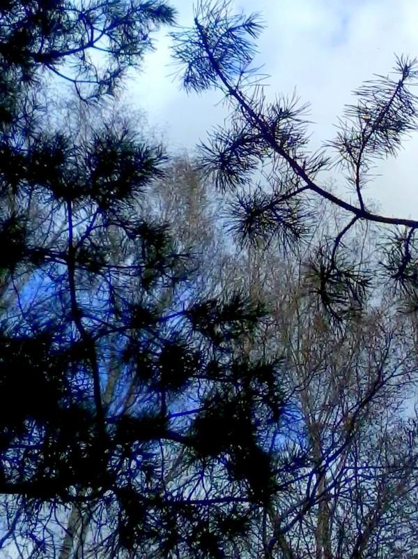 Смешанный лес - Люба Гительман