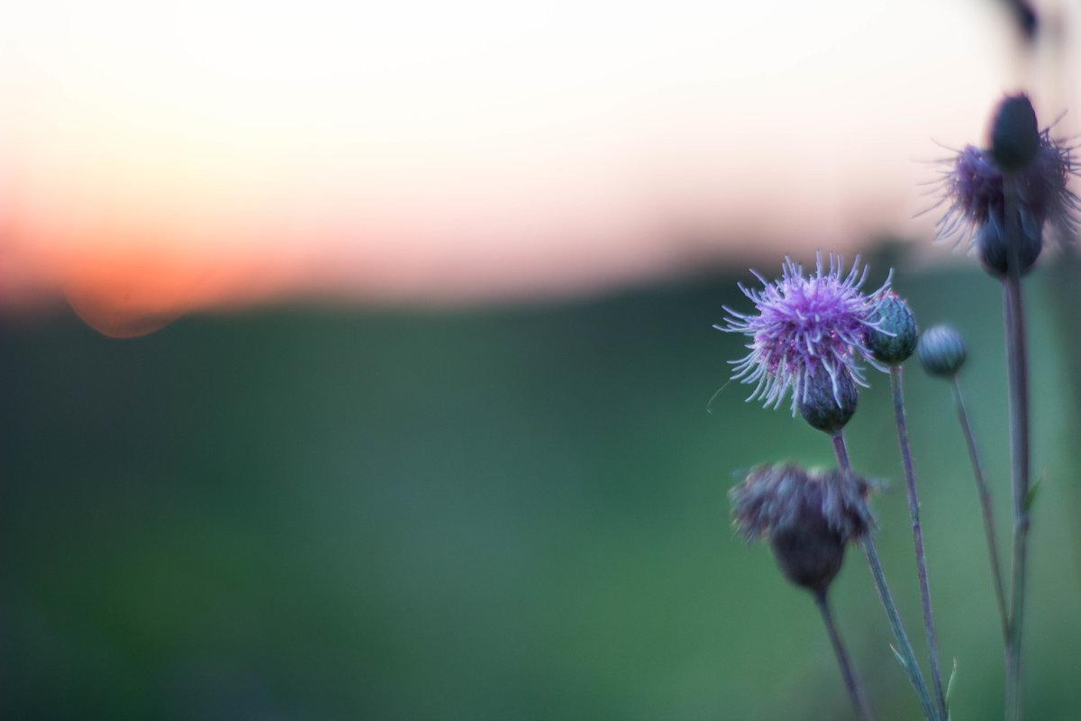 Вечер в поле - Александра Сучкова