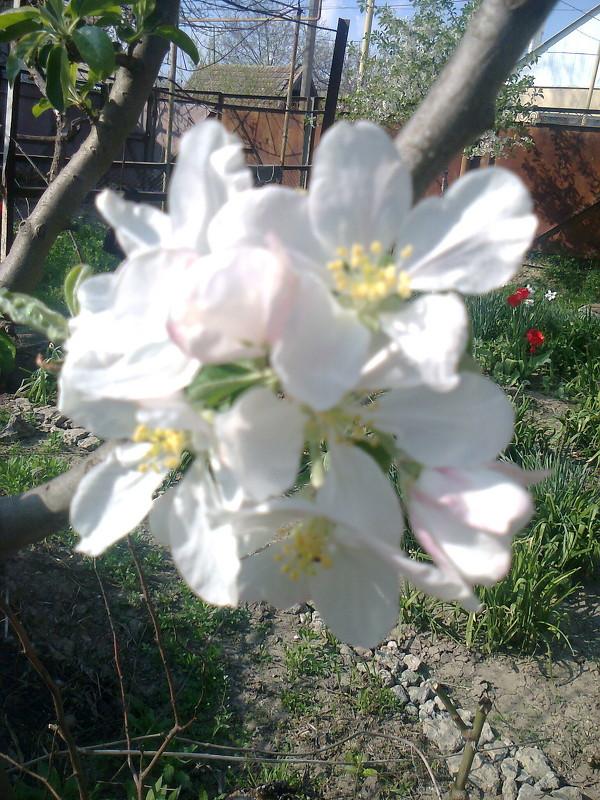Зацвели сады - Натали Жоля