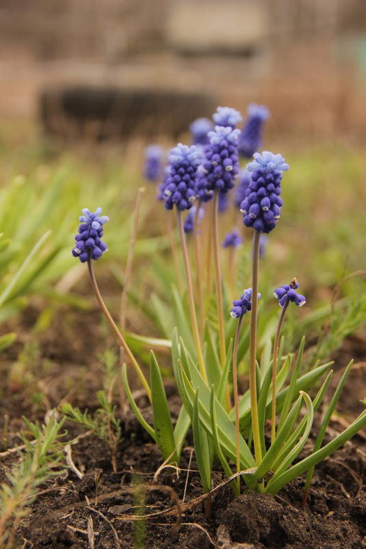 Голубые цветы - Марина Кулымова