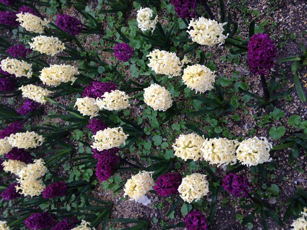 Цветы - Kameliia Хадлер