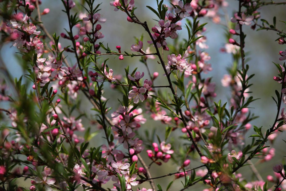 цветение - Ekat Grigoryeva