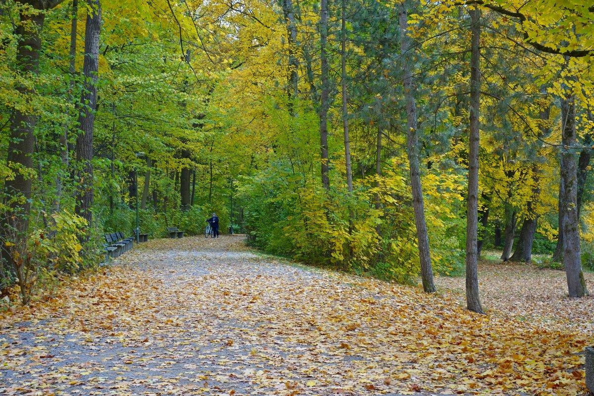 """""""Шуршащие листья, осколками лета, уснут на земле в этом парке чудес..."""" - Galina Dzubina"""