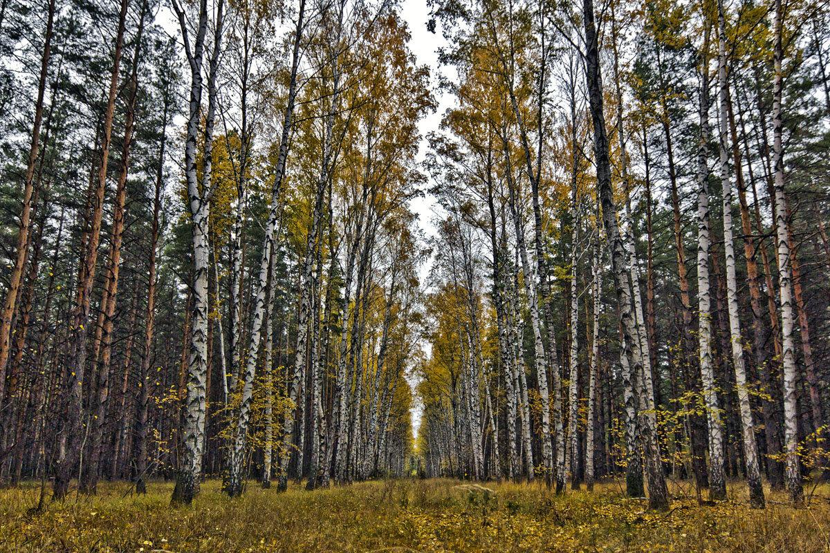 в лесу - Геннадий Свистов