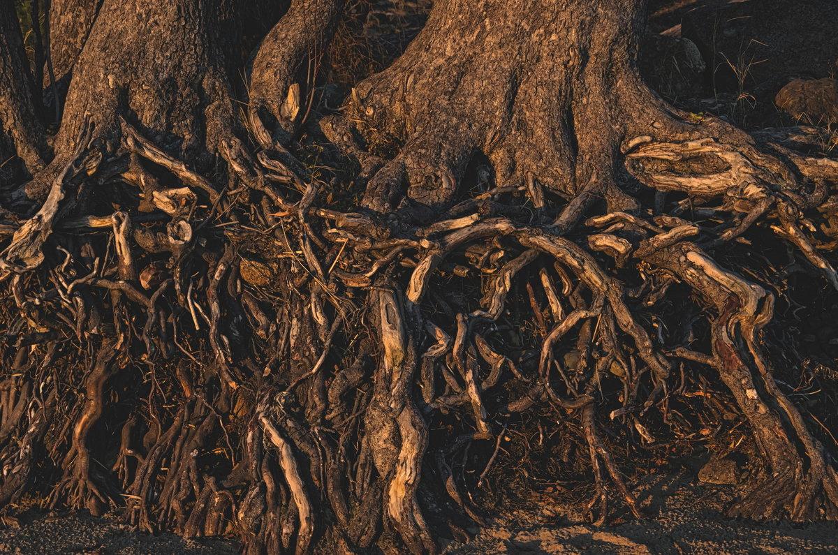 о прибрежных деревьях... - Ирэна Мазакина