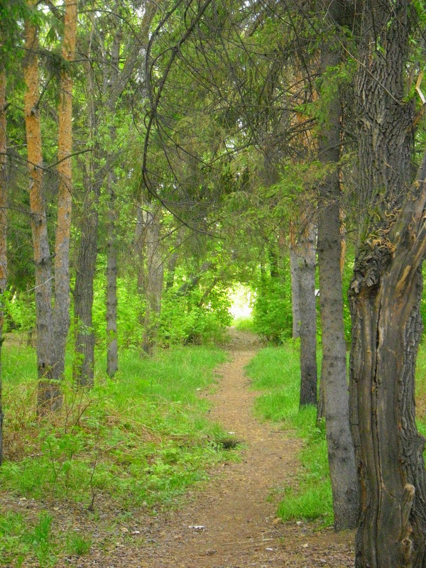лес - Люба Гительман