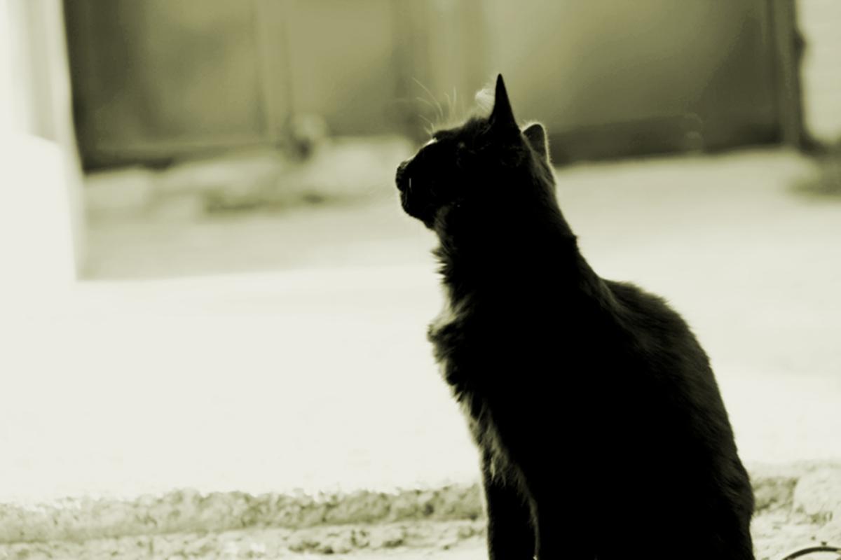 Кот, который гуляет сам по себе - Дашка Стеценко