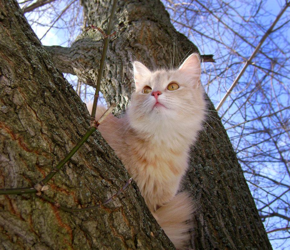 кот на дереве - Олег Сливанков
